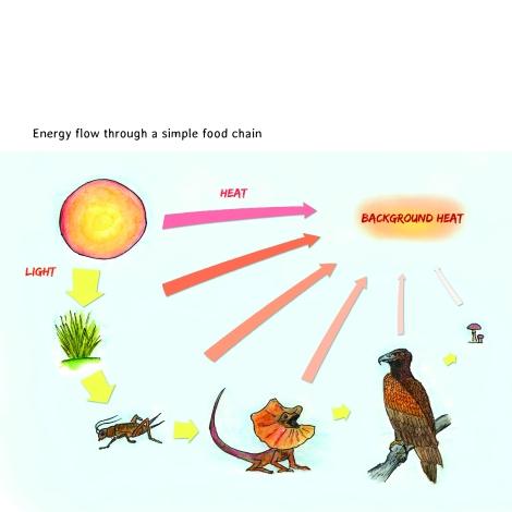 energy flow simple