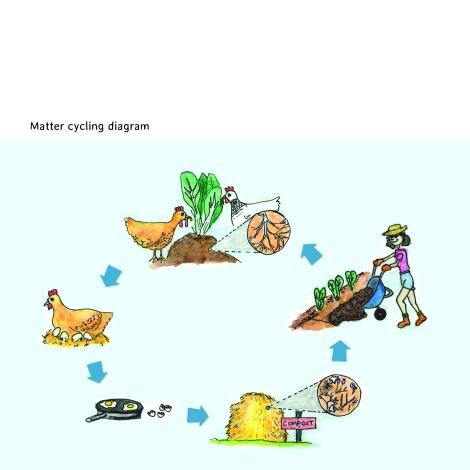 matter cycling diagram